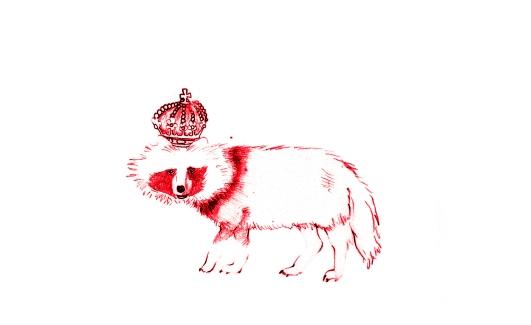 rey mapache